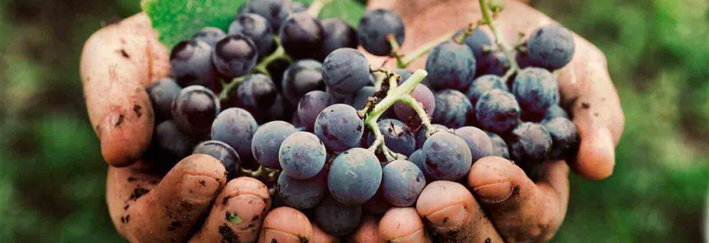 """Francia: Auchan """"spinge"""" i fornitori a tenere conto dei costi agricoli"""