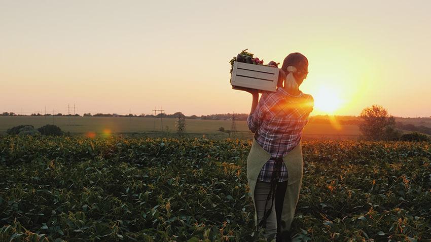 Caporalato: circolare Inps disciplina l'inquadramento previdenziale agricolo di oltre 20mila operai