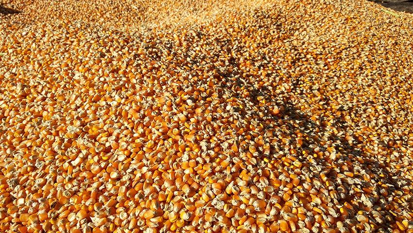 Fondo per la competitività delle filiere agroalimentari: ripatiti i finanziamenti