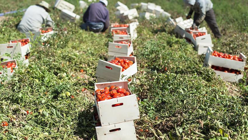 Un Piano di azione emergenziale per il lavoro agricolo